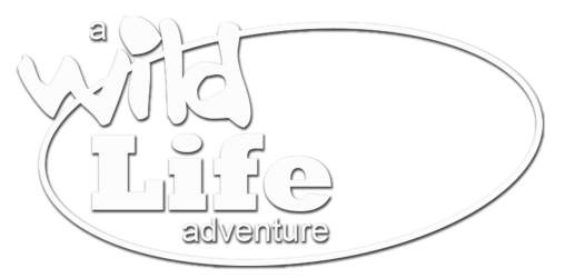 Wild Life Academy, Ontario Team Building Recreation & Fitness