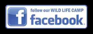 camp facebook